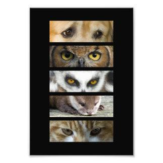 De Ogen van dieren Foto Kunst