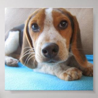 De ogen van een puppy 2. poster