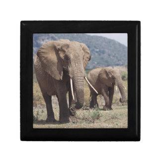 De olifant die van de moeder met olifantskalf decoratiedoosje