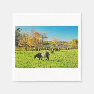 De omgorde Koeien die van Galloway op Gras in Papieren Servetten
