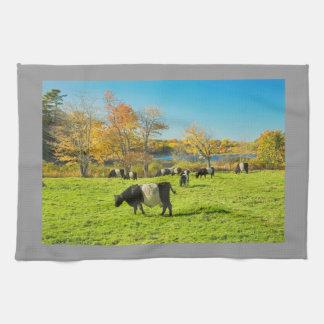 De omgorde Koeien die van Galloway op Gras in Theedoeken