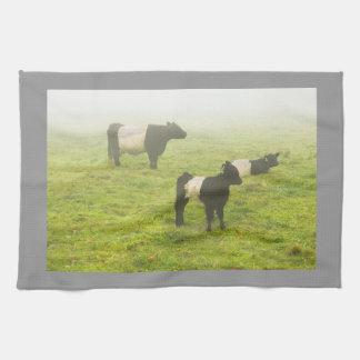 De omgorde Koeien die van Galloway op het mistige Theedoek