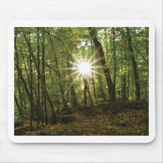 De onderbrekingen van de zon door bos muismatten