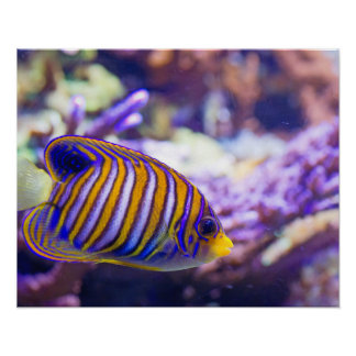 De onderwater Gele Vissen van de Vlinder van het Poster