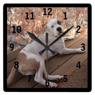 De onweerstaanbare Hond van de Portiek Genummerd Vierkante Klok