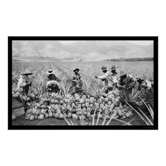 De Oogst Hawaï 1917 van de ananas Poster