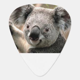 De Oogsten van de Gitaar van de koala Plectrum