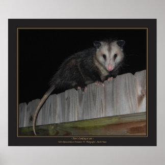 De Opossum van Florida Poster