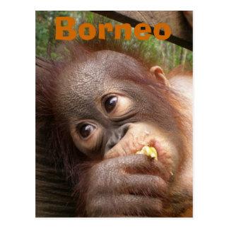 De Orangoetan van het Baby van Borneo Briefkaart