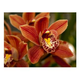 De oranje Bloemen van de Orchidee Briefkaart