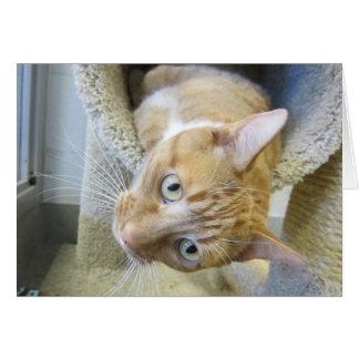 De oranje en Witte Kat van de Gestreepte kat Briefkaarten 0