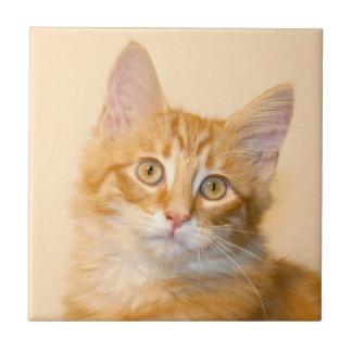 De oranje tegel van het gestreepte katkatje tegeltje