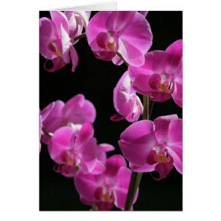 De orchidee komt Wenskaart tot bloei