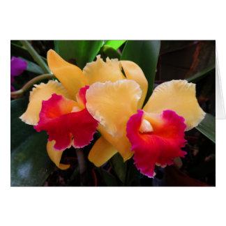 De Orchidee van Cattleya Briefkaarten 0
