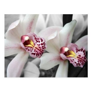 De Orchidee van de brand Briefkaart