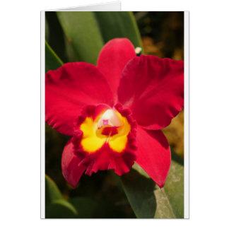 De Orchidee van de brand Wenskaart