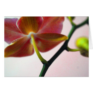 De Orchidee van haiku's Briefkaarten 0
