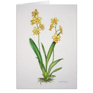 De Orchidee van Odontonia Wenskaart
