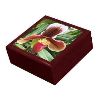 De Orchidee van Paphiopedilum Bloemen Decoratiedoosje