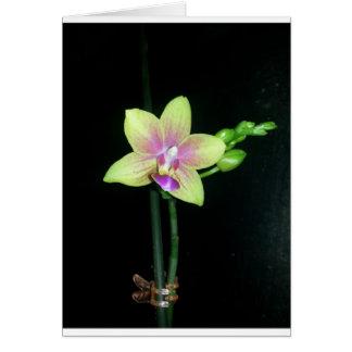 De Orchidee van Phalaenopsis (spatie binnen) Wenskaart