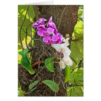 De Orchidee van Phalaenopsis Wenskaart