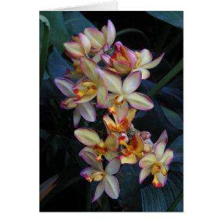 De Orchidee van Spathoglottis Wenskaart