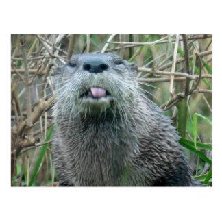 De Otter van de rivier Briefkaart