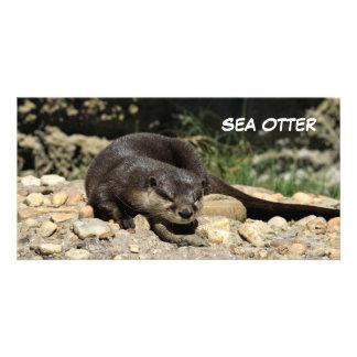 De Otter van het zee bij de Reserve van het Wild Kaart