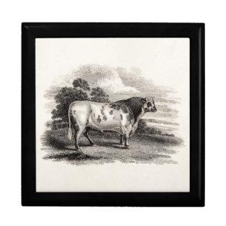 De Oude Landbouw Witte Stieren van de vintage Decoratiedoosje