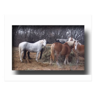 De paarden van het ontwerp het eten briefkaart