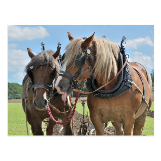De paarden van het ontwerp in briefkaart
