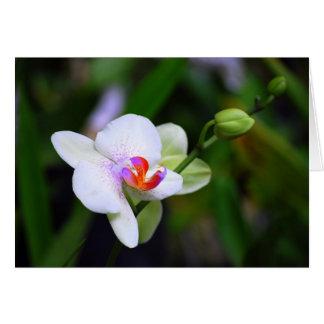 De paarse Bevlekte Kaart van de Orchidee