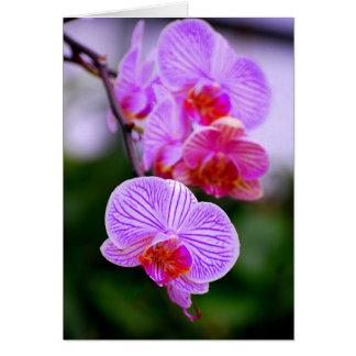 De paarse Gestreepte Kaart van de Orchidee
