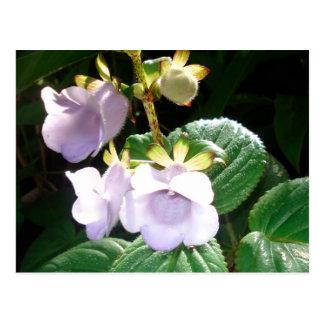 De Paarse Orchidee van Fiji Briefkaart
