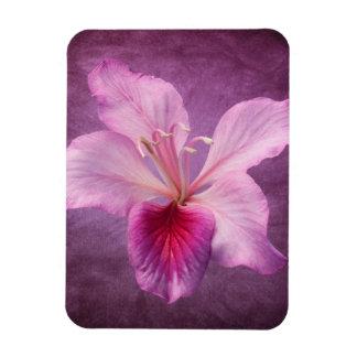 De paarse Roze Bloem van de Boom van de Orchidee Magneet