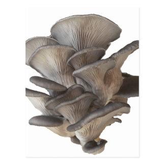De Paddestoel van de oester Briefkaart