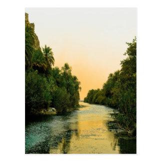 De palm bosvrede en rust van Finikodasos Briefkaart