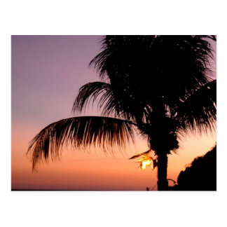 De Palm van Acapulcan bij Schemer Briefkaart