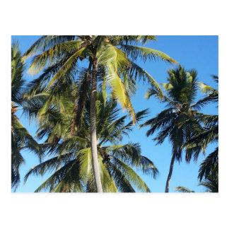 De palmen van Maragogi Briefkaart