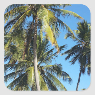 De palmen van Maragogi Vierkante Sticker