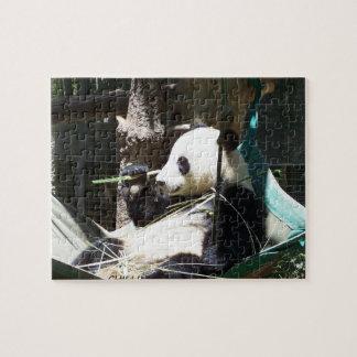 De panda draagt Raadsel Puzzel