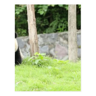 De Panda van het baby Briefkaart