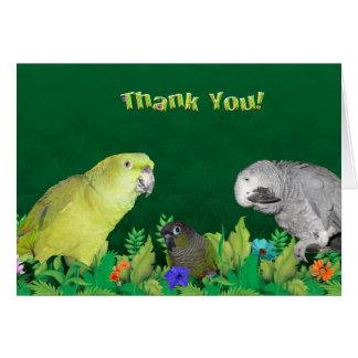 De Papegaai van het oerwoud dankt u nota neemt van Kaart