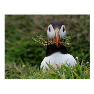 De Papegaaiduiker van de Bouwer van het nest Briefkaart