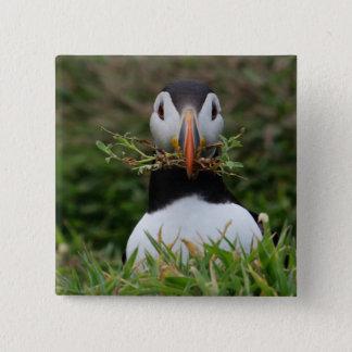 De Papegaaiduiker van de Bouwer van het nest Vierkante Button 5,1 Cm
