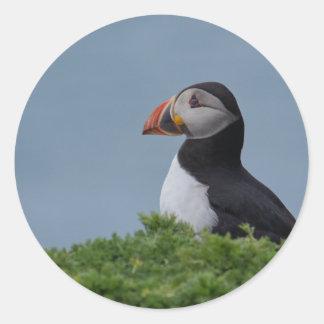 De Papegaaiduiker van het profiel Ronde Sticker