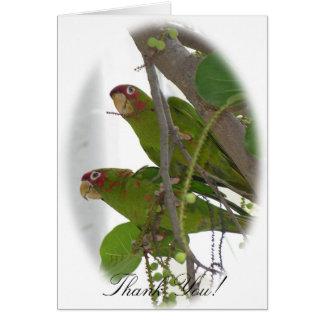 De Papegaaien van de liefde Kaart