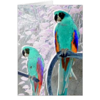 De Papegaaien van het ijs Briefkaarten 0