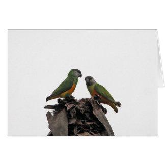 De Papegaaien van Senegal Kaart