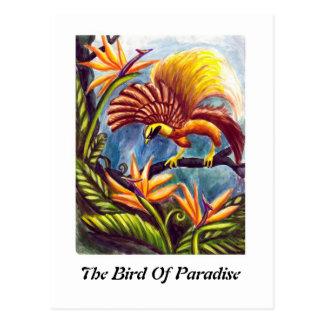 De paradijsvogel briefkaart
